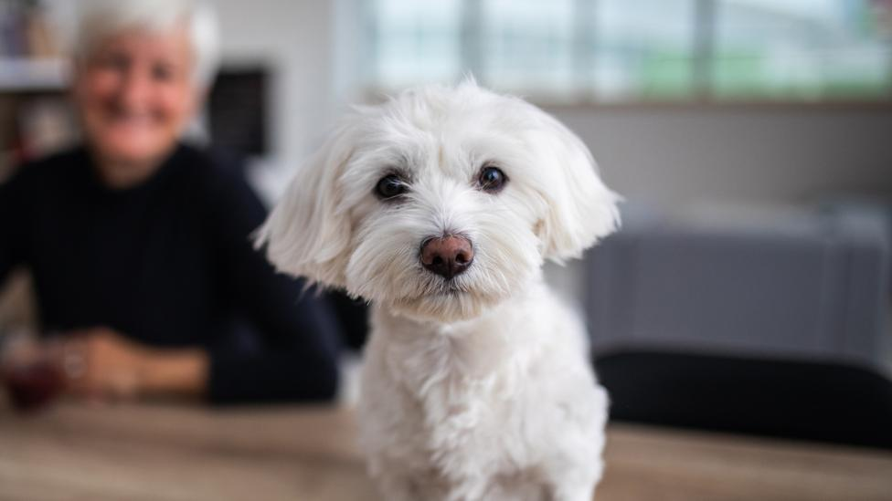 Coronavirus: Dogs to be trained to detect virus