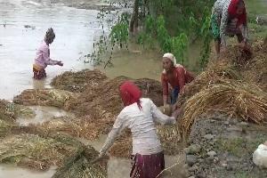 आठ अर्ब बढीको धान बाली क्षति हुँदा जम्मा १५ लाखको बीमा दाबी, कृषि बीमाकाे अवस्था किन नाजुक?